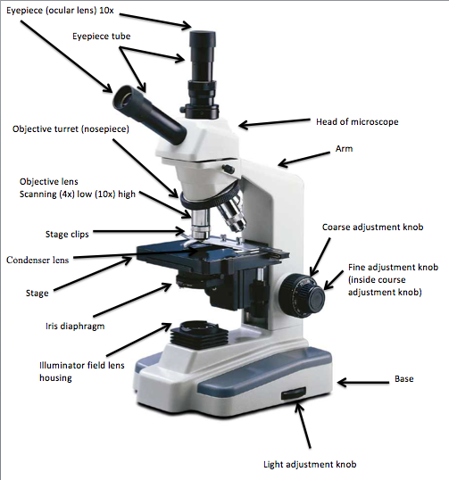 The Compound Microscope - ChristinaLovemicroscopy